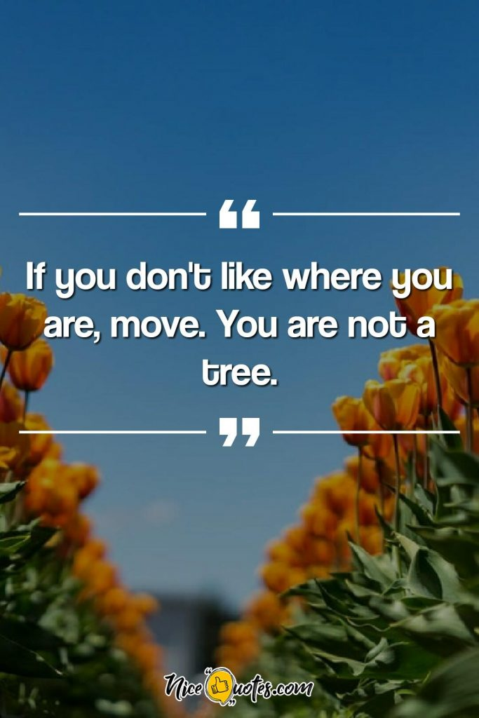 If you don't like where you are, move. You are not a tree