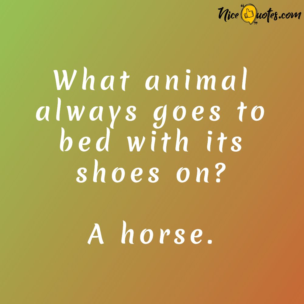 animal_always_goes_to_bed