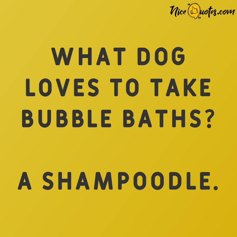 what_dog_loves_to_take_bubble_baths