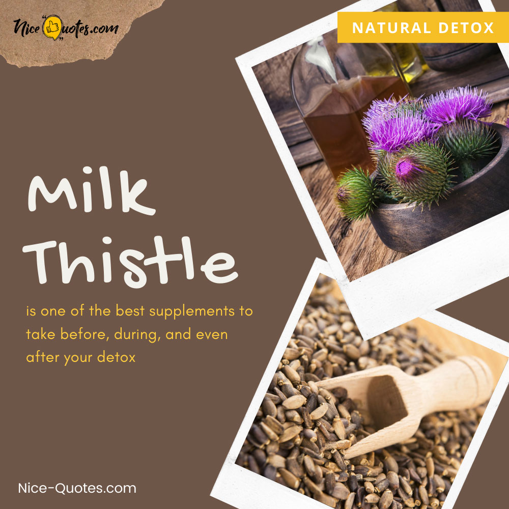 Milk Thistle is one of the best supplements